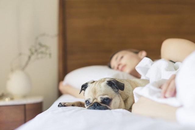 Žena spiaca v posteli so psom